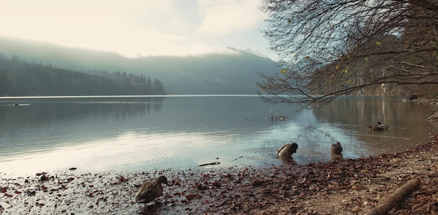 The coast of alpsee lake in evening gloomy day
