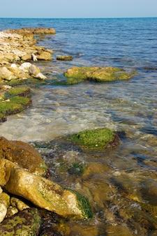 Побережье с камнями с зелеными морскими водорослями