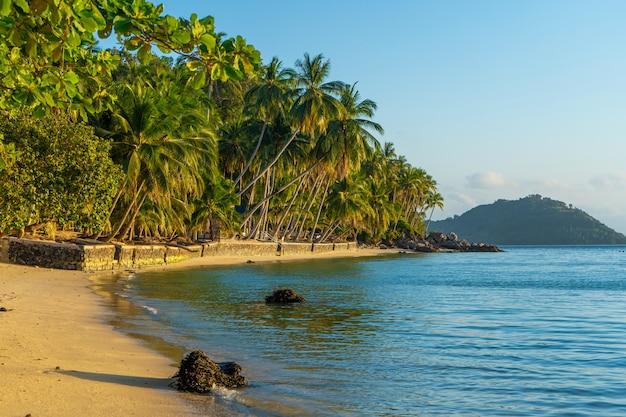 Береговая линия с песчаным пляжем и пальмами на тропическом острове.