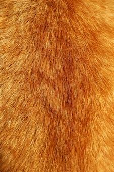 빨간 고양이 모피 코트를 닫습니다.