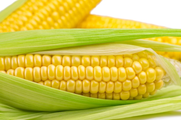 Cobs of ripe sweet corn isolated