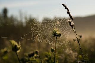 Cobweb, abstract
