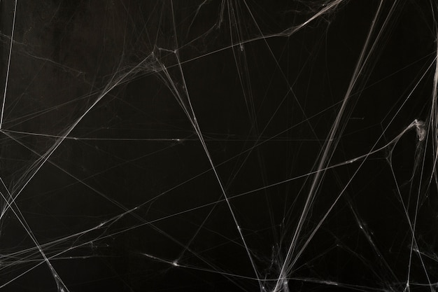 Cobweb halloween background