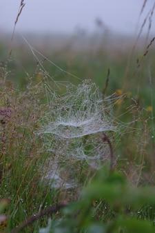 이른 아침 이슬 속의 거미줄은 흐릿한 보케 배경에 노란색과 녹색 사이입니다. 자연에서 물 방울과 거미줄. 선택적 초점, 수직 프레임입니다.