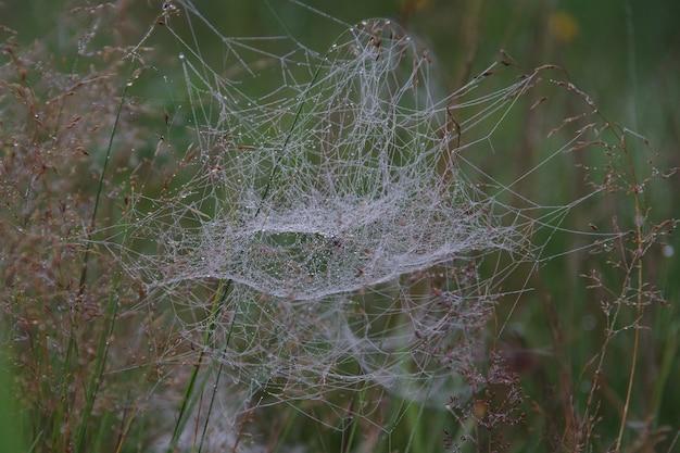 이른 아침 이슬 속의 거미줄은 흐릿한 보케 배경에 노란색과 녹색 사이입니다. 자연에서 물 방울과 거미줄. 선택적 초점