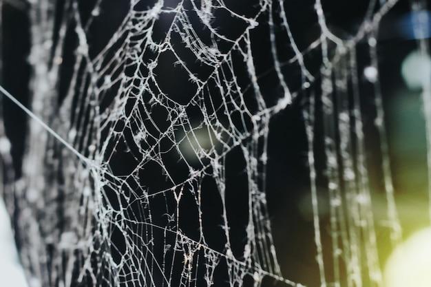 아침에 거미줄. 어두운 배경에 클로즈업입니다. 흰 거미줄