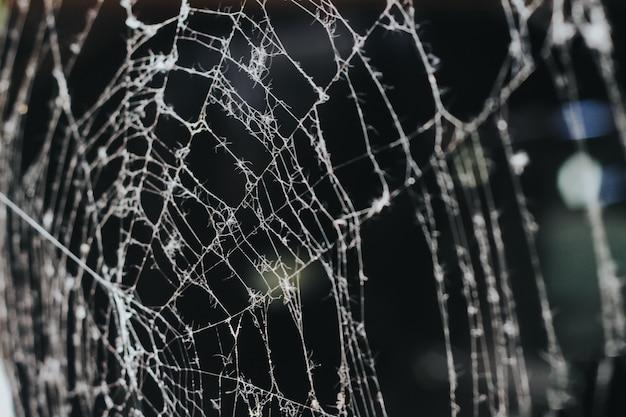 朝の蜘蛛の巣。暗い背景のクローズアップ。白い蜘蛛の巣