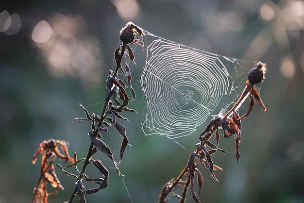 백라이트가 풀밭에 거미줄입니다. 자연의 아름다움