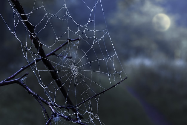 Cobweb with dew drops on a dark, mysterious night sky with a full moon