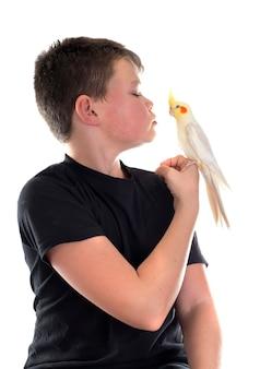 Cockatiel птица и мальчик