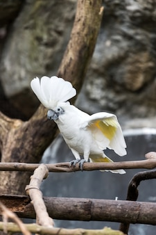 A cockatoo on a tree branch, cockatoo on a perch