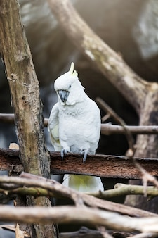 A cockatoo on a tree branch, cockatoo on a perch.