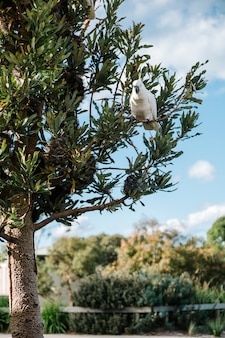 Cockatoo on tree