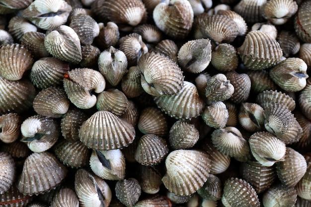 Ракушки из морепродуктов, куча свежей крови, ракушки, вид сверху, ракушки или морские гребешки, свежие сырые моллюски, ракушки для продажи на рынке