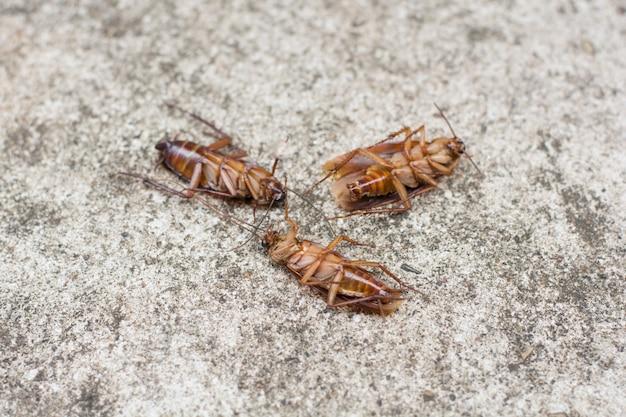 Cockroach on concrete floor