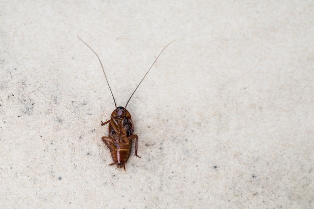 Cockroach death on the floor