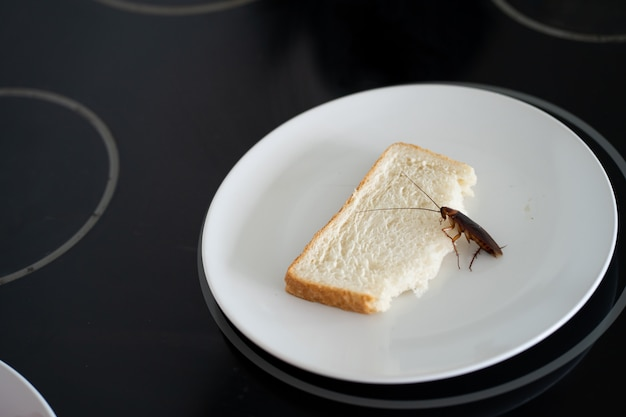 A cockroach is sitting on a piece of bread in a plate in the kitchen. cockroaches eat my food supplies