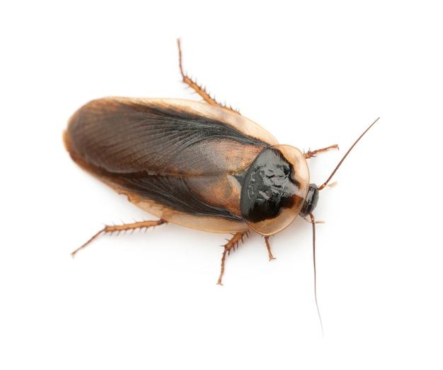고립 된 바퀴벌레