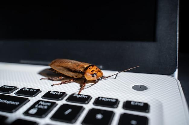 Таракан на клавиатуре ноутбука или ноутбука, крупным планом вид сверху.