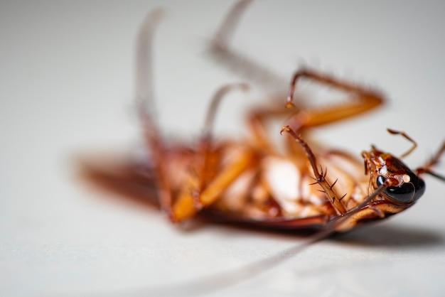 흰색 배경에 바퀴벌레, 집에서 바닥에 죽은 곤충 바퀴벌레는 바퀴벌레 버그를 제거합니다