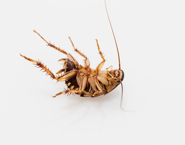 Cockroach on white surface