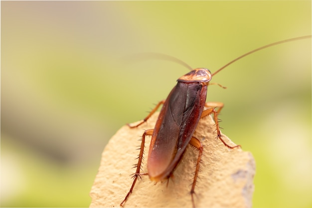 Cockroach on wooden