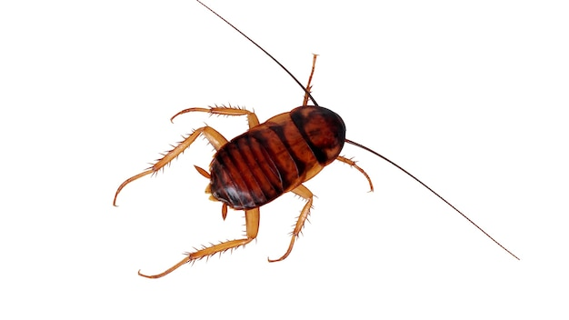 Тараканы на белом фоне