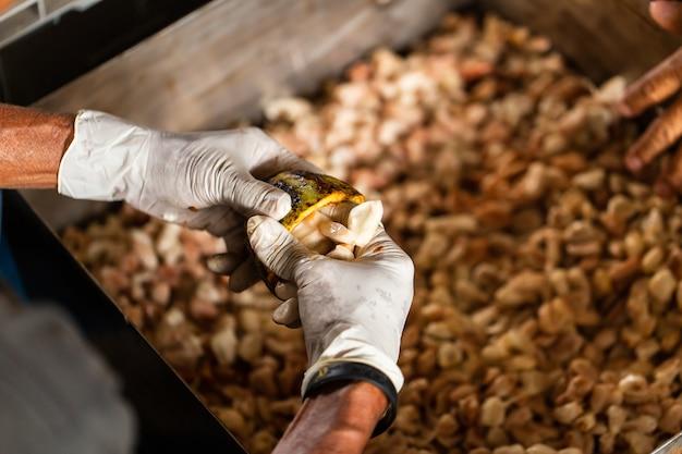 Какао-бобы и стручки какао на деревянной поверхности.