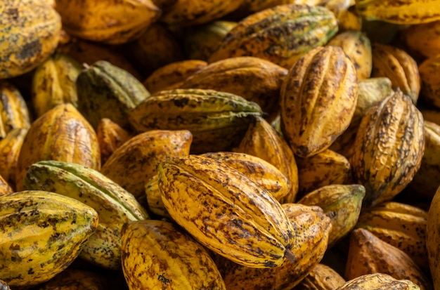 Cocoa beans and cocoa pod on a wooden background