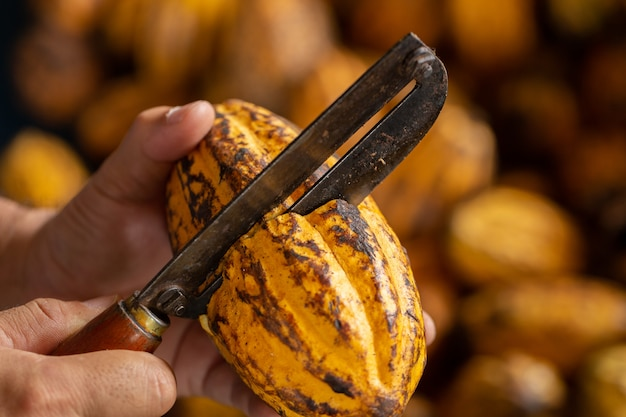 Cocoa beans and cocoa pod on a wooden surface