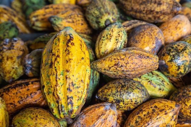 ココアフルーツとココアポッド