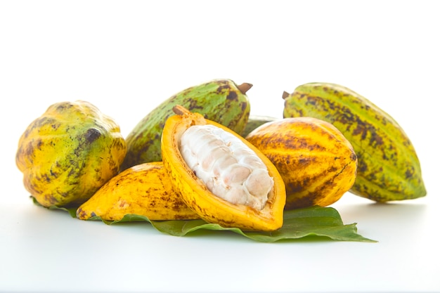 Cocoa pods with cocoa leaf on a white background