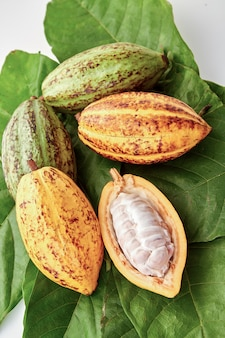 Cocoa pods with cocoa leaf on a white