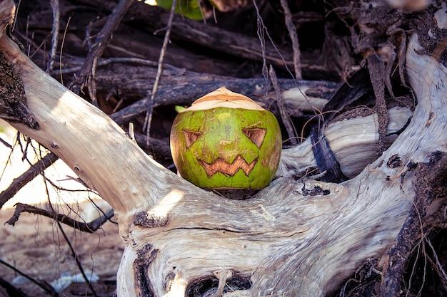Кокос, вырезанный в виде тыквы на хэллоуин, как фонарь из тыквы стоит в корнях дерева.