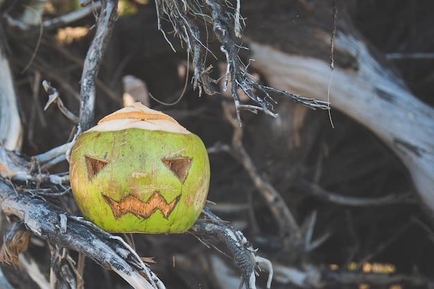 Кокос, вырезанный в виде тыквы на хэллоуин, концепция празднования дня всех святых в тропиках