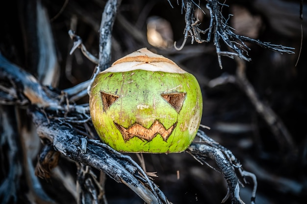 Coconut carved like a pumpkin for halloween concept autumn celebration all saints day in tropics