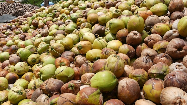 油とパルプの生産の準備ができているナッツのあるココナッツ農場。熟した選別されたココナッツの大きな山。タイのパラダイスサムイ熱帯の島。伝統的なアジアの農業。