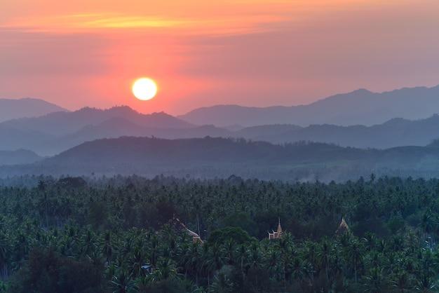 Coconut field