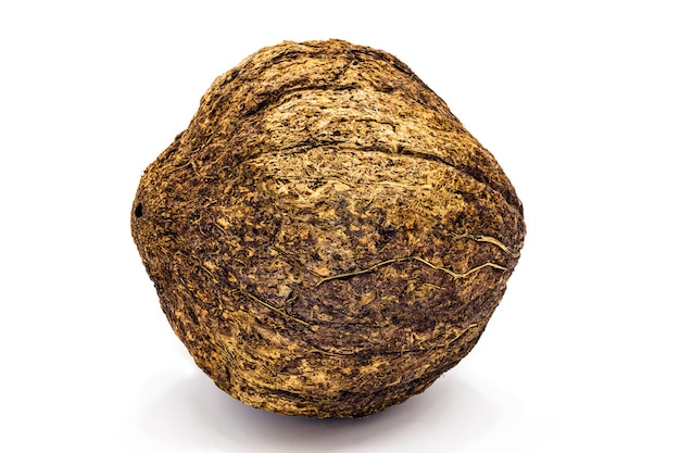 Coconut from brazil nut with shell on white background, common walnut from south america