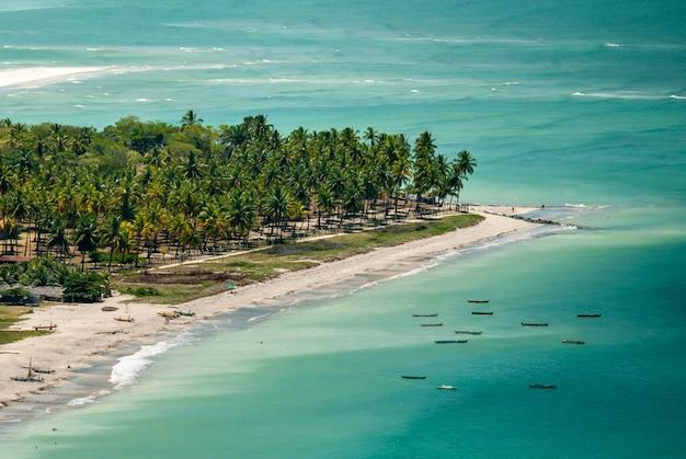 2010년 3월 10일 브라질 페르남부쿠 이타마라카 섬의 코코넛 과수원.