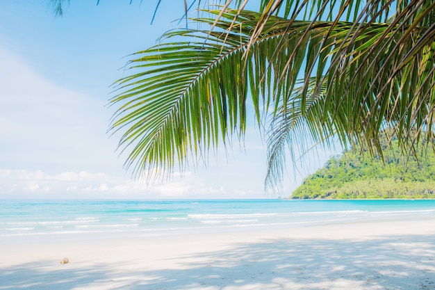 Coconut leaves on beach.