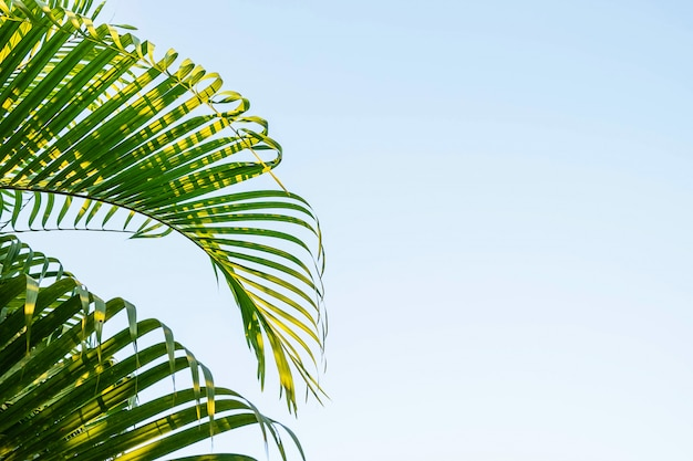 Coconut leaves and sky background