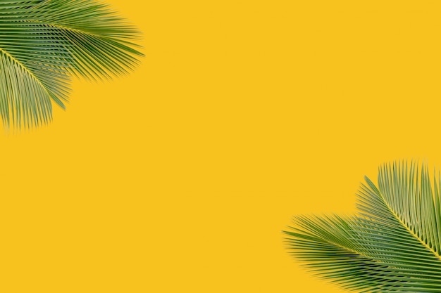 Coconut leaves on a yellow background to show products