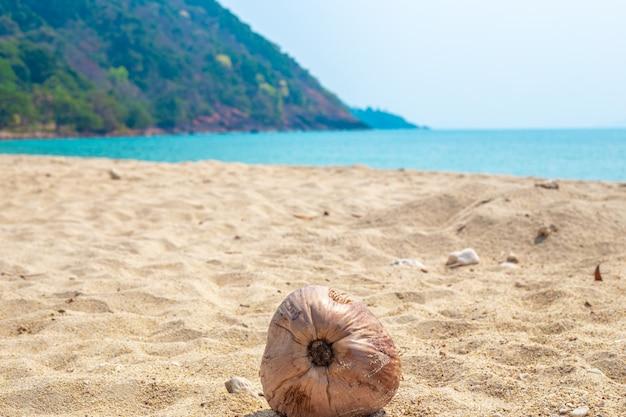 ココナッツは熱帯の波で海岸に横たわっています