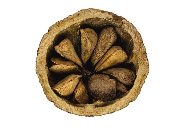 ブラジルナッツのココナッツは半分に開いており、白い背景にシェルがあり、南アメリカの一般的なクルミです