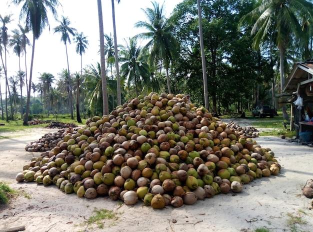 Производство кокосового масла. горы кокосовых орехов.
