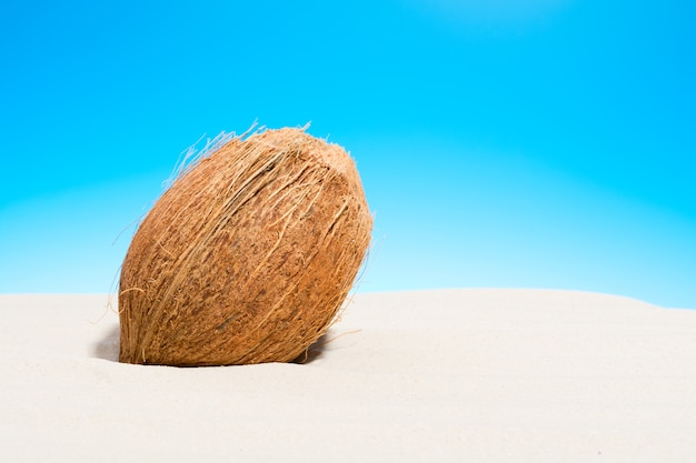 砂浜のココナッツ