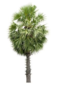 흰색 배경에 격리된 코코넛 또는 야자수는 건축 디자인 또는 그 이상에 사용됩니다.