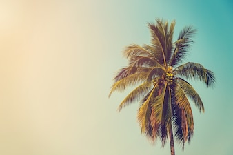 Coconut palm tree and sky on beach with vintage toned.