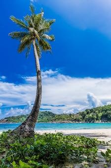 ココナッツ椰子の木と熱帯の海の夏休みと熱帯のビーチ